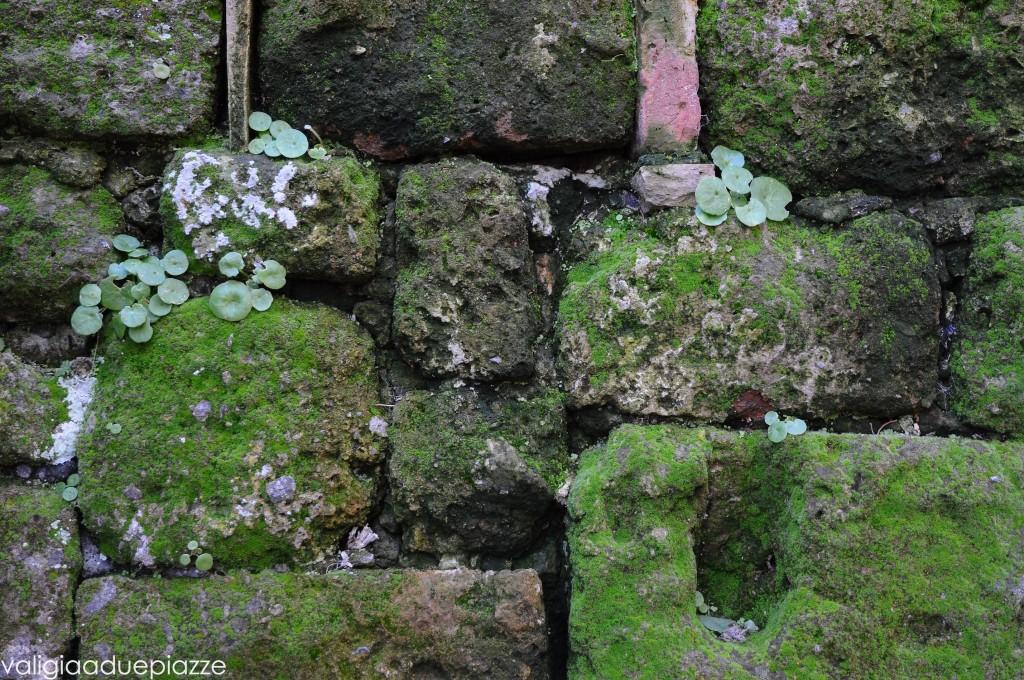 rocce tufacee dettaglio Civita