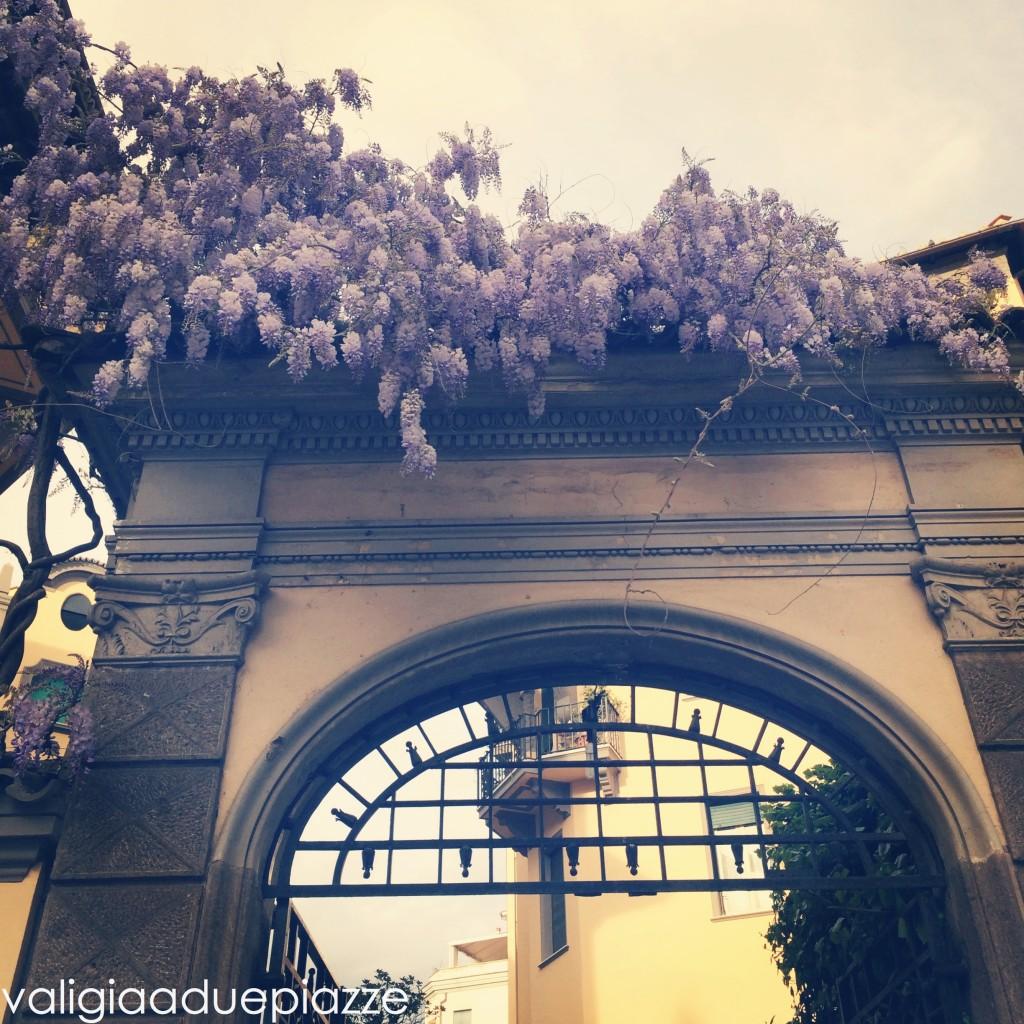 Viale Regina Margherita glicini