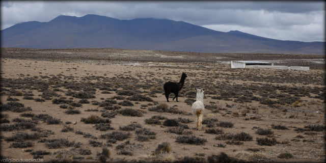 Lama andini