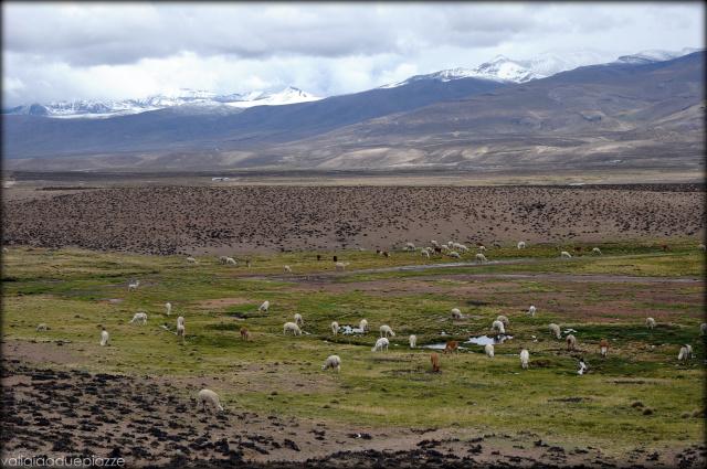 La valle degli alpaca