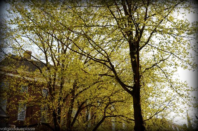 primavera Amsterdam Spui