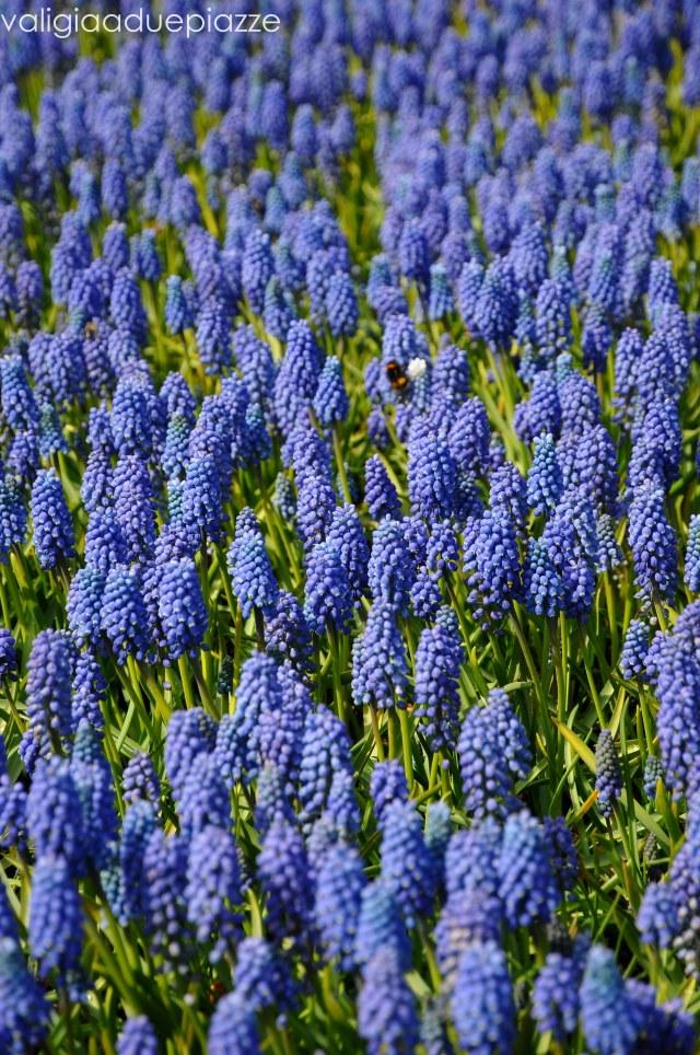 dettaglio fiori keukenof