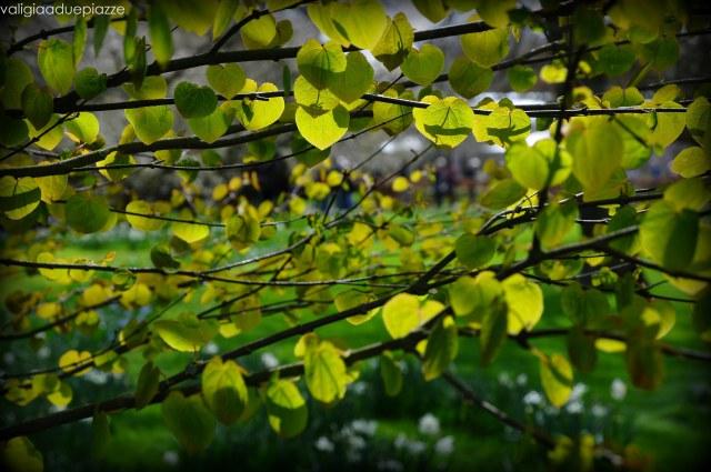 alberi keukenhof