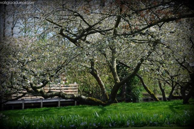 giardino keukenhof