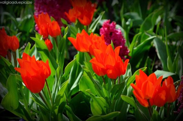 tulipani keukenhof