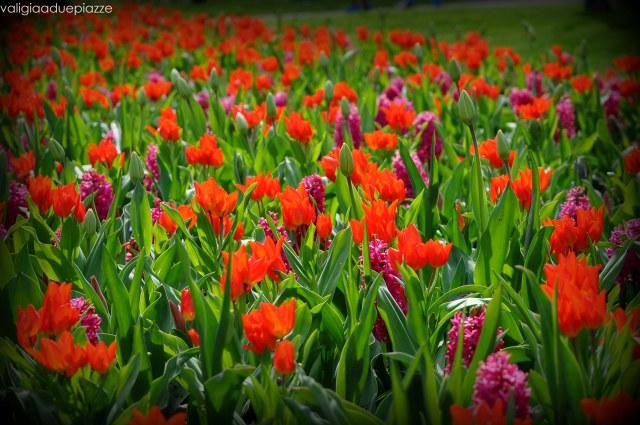 giacinti tulipani keukenhof