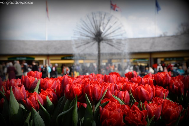 tulipani rossi olanda
