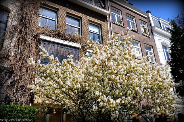 alberi in fiore amsterdam