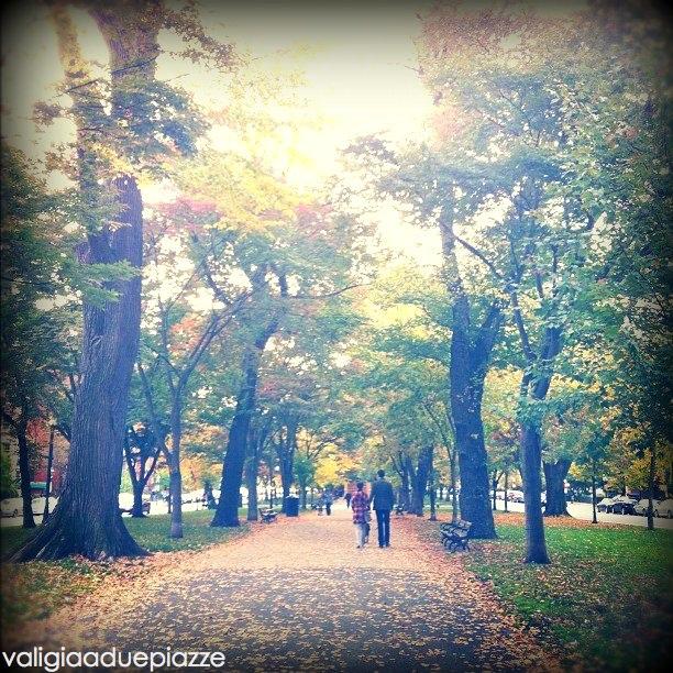 Commonwealth Park foliage