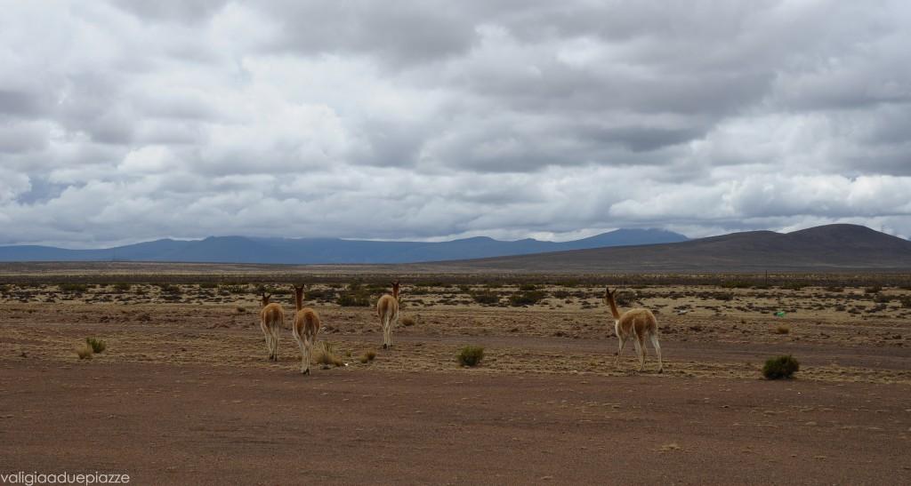 Reserva Nacional Salinas y Auguada Blanca Perù Ande