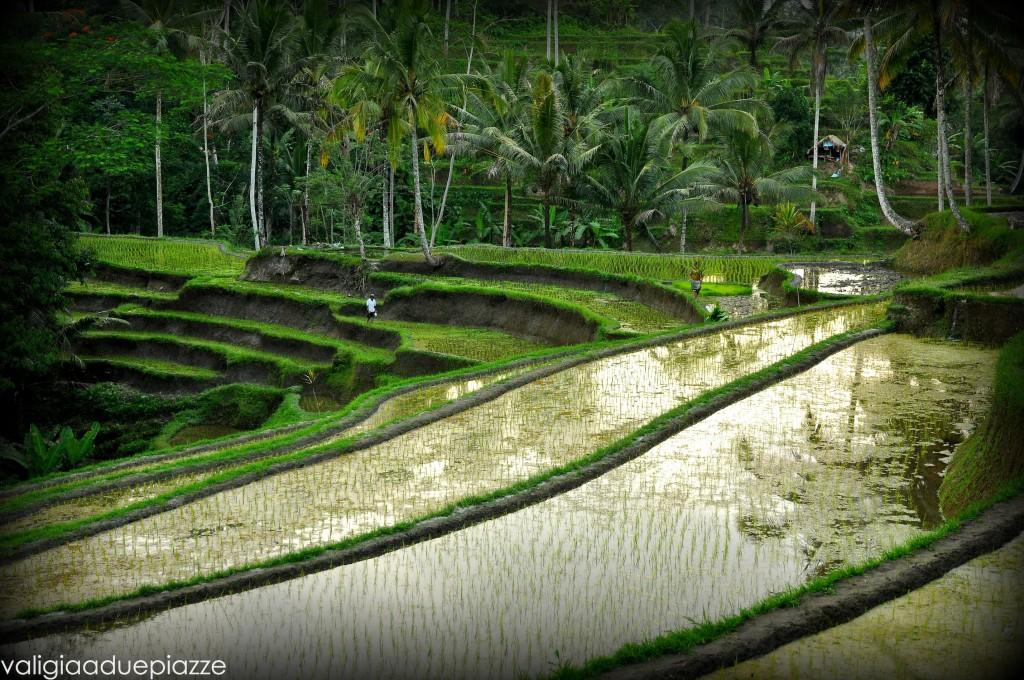 Tempio del Gunung Kawi Bali