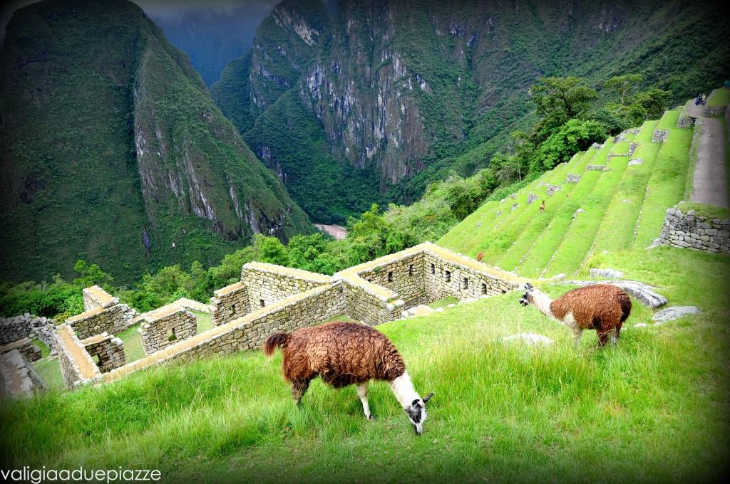 Machu Picchu Ande
