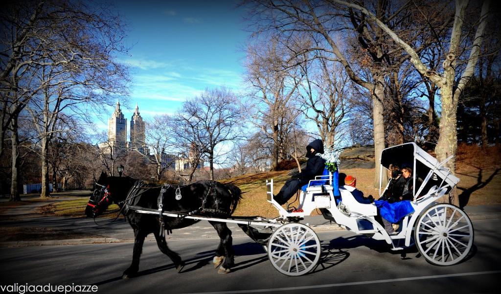 Carrozze a cavalli Central park