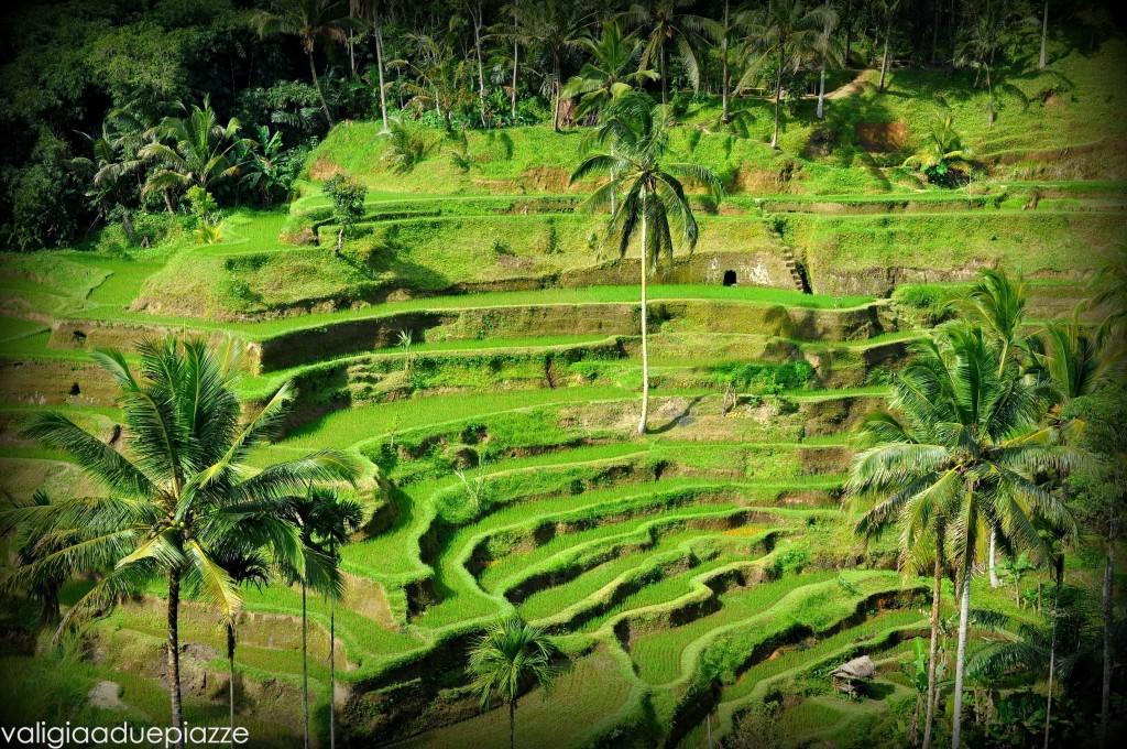 Tegalalang Bali Indonesia