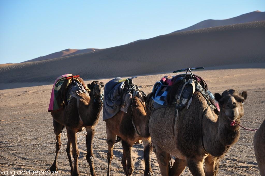 Dromedari Sahara