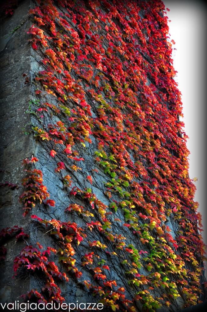 Carcassonne foliage