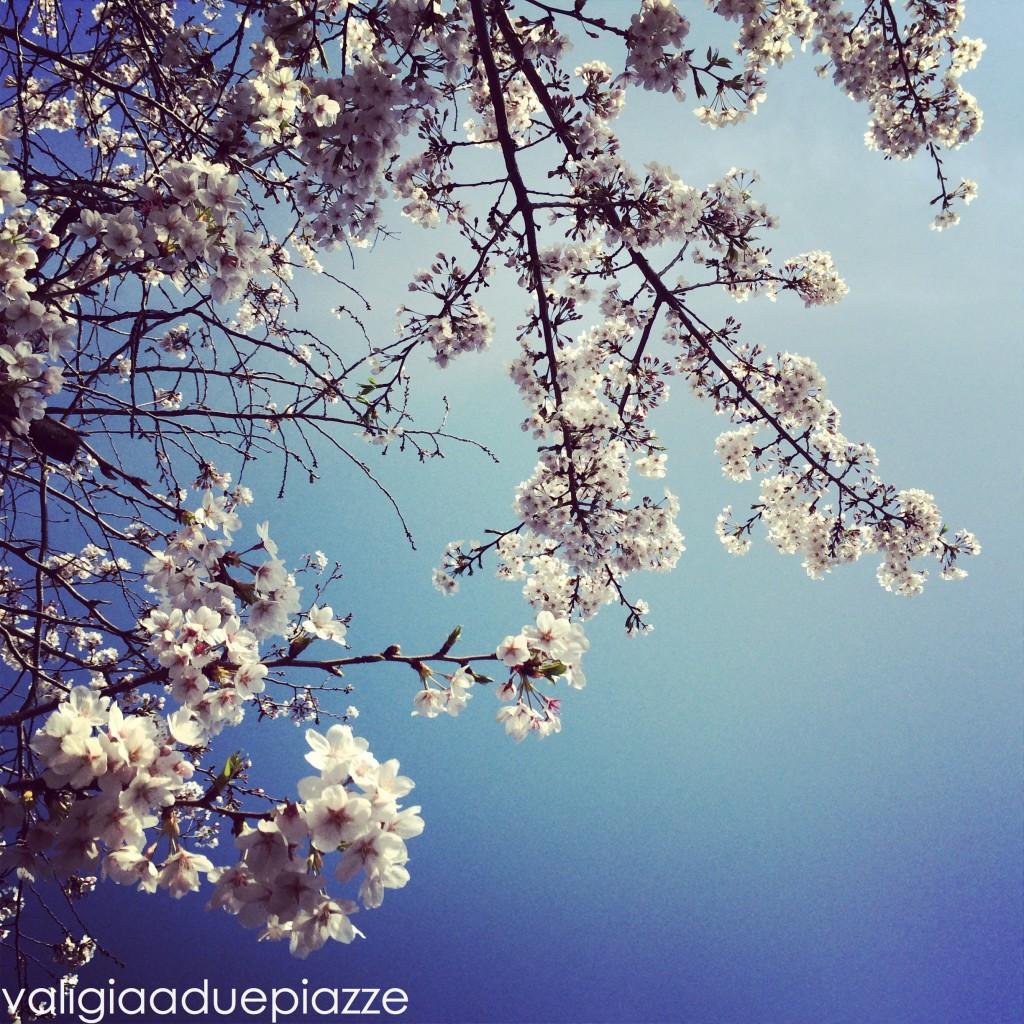Primavera hanami roma