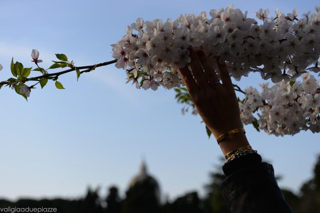ramo carico di fiori di ciliegio sakura