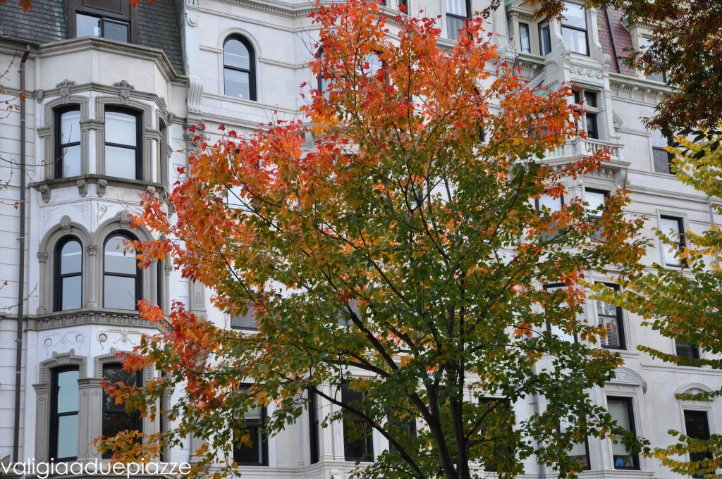Boston autunno foliage