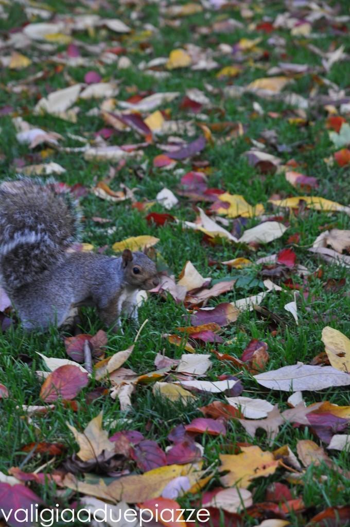 scoiattolo boston common