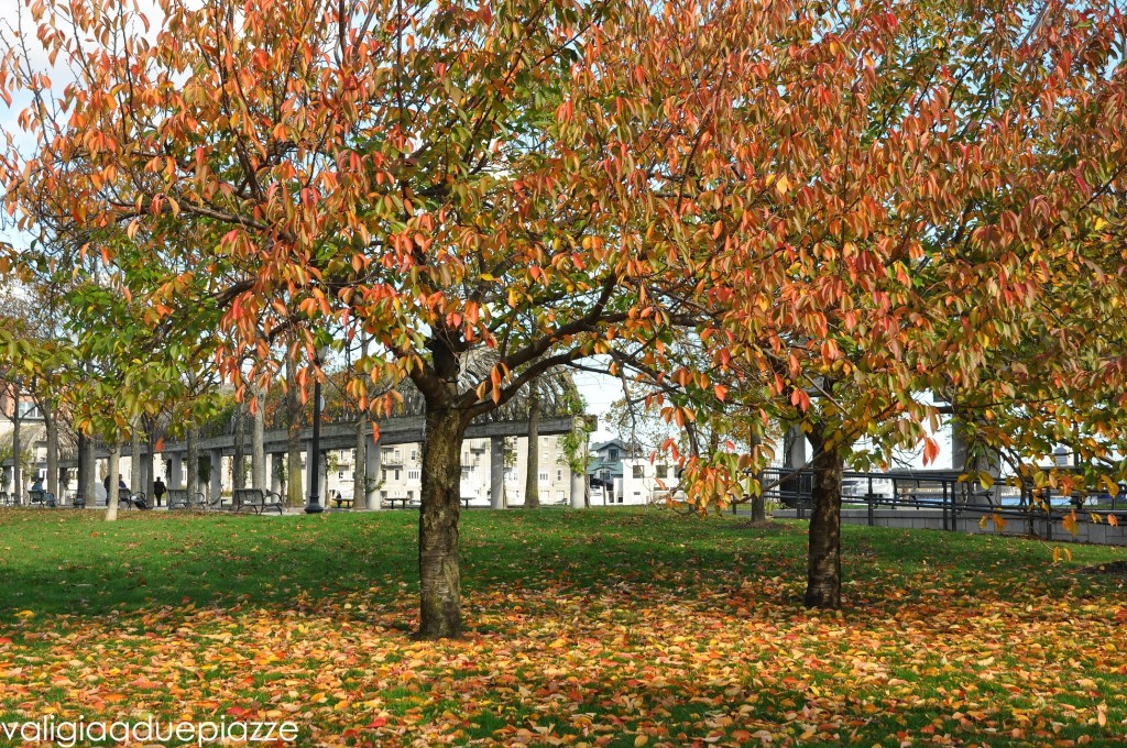 foliage boston