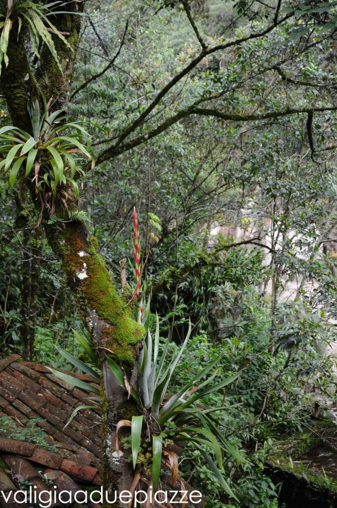 foresta tropicale machu picchu