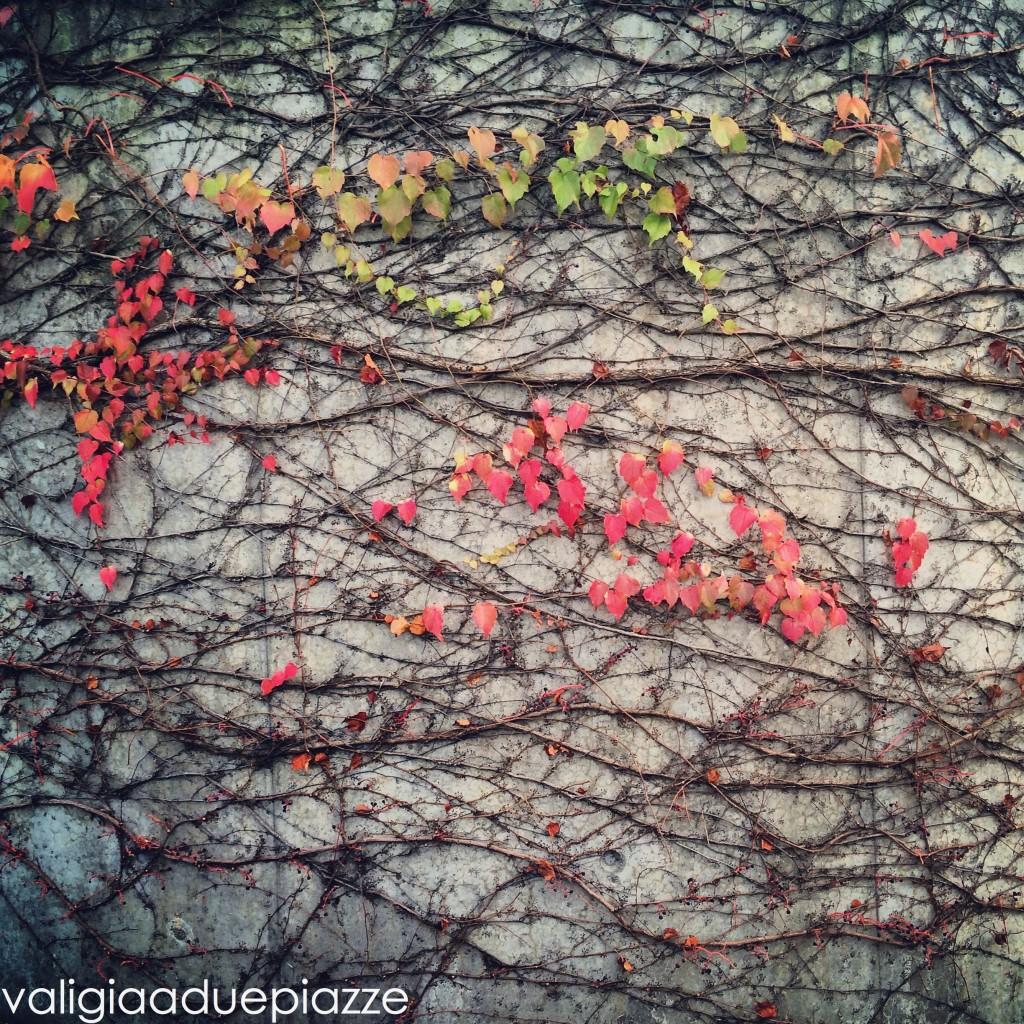foliage berna