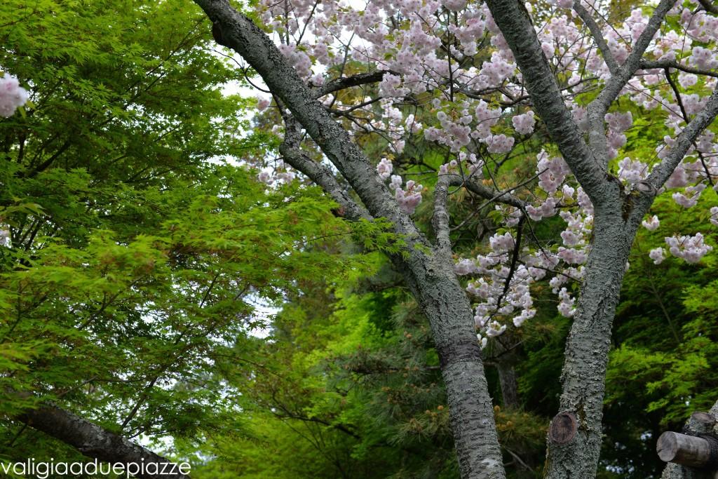 sakura komorebi tokyo