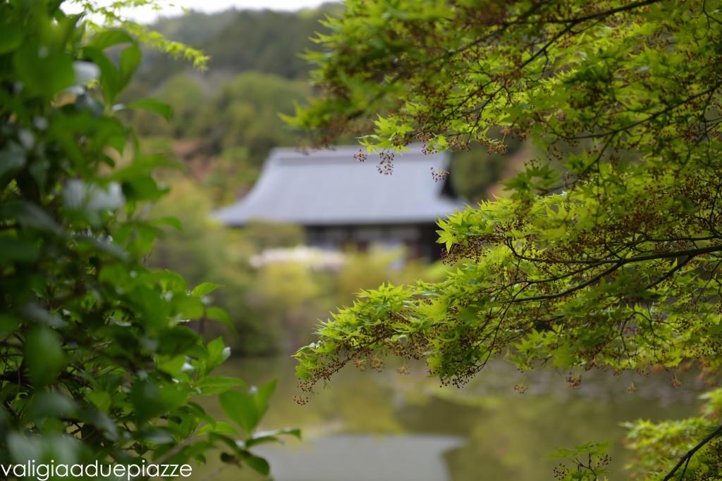 kyoto komorebi