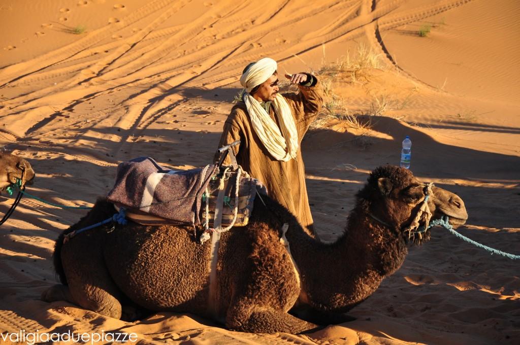 camello marocco
