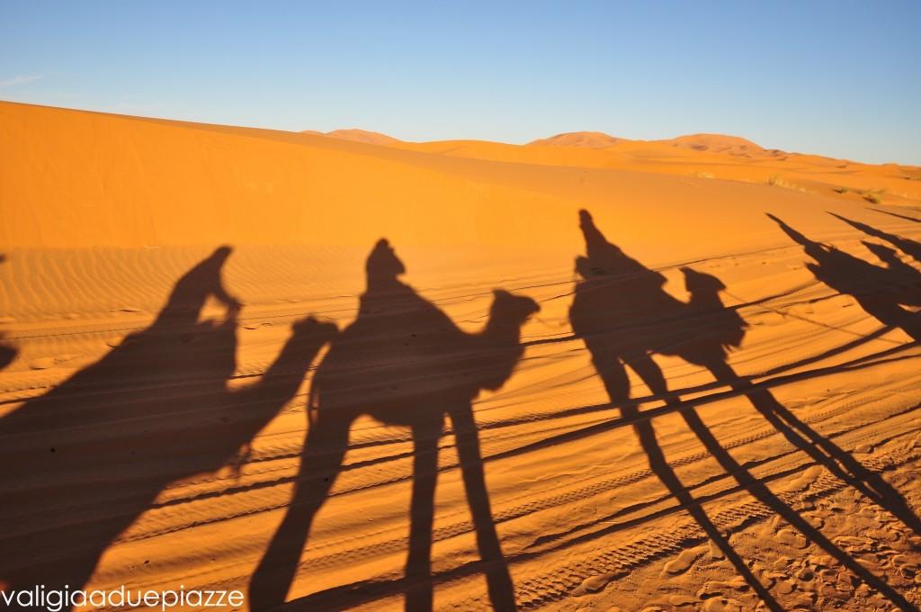 camel tour marocco