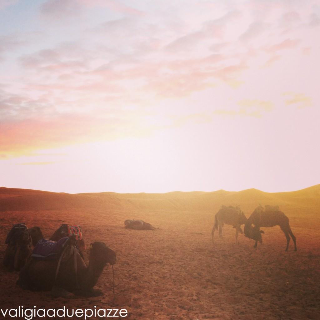 Oasi deserto Marocco
