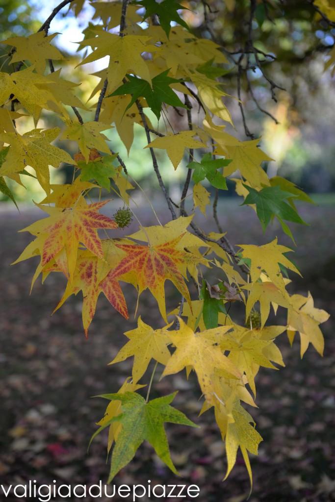 foliage san liberato