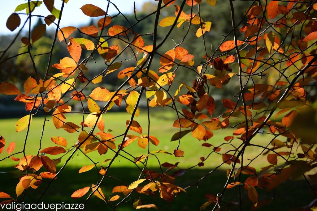 foliage san liberato lago di bracciano