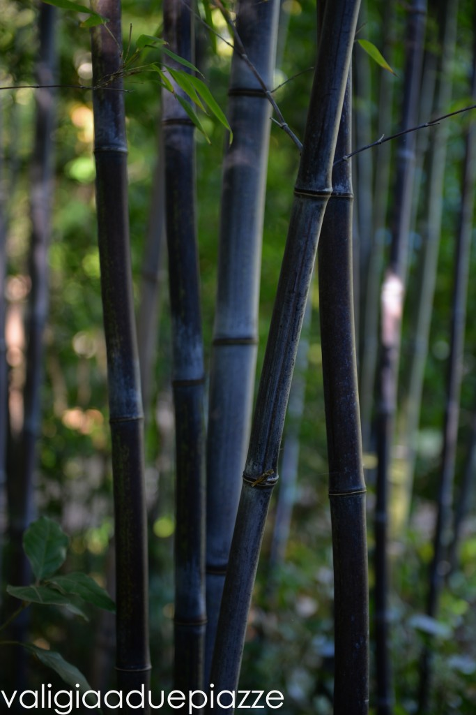 bambù nero san liberato
