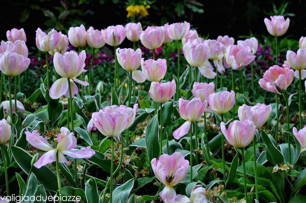 tulipani hyde park