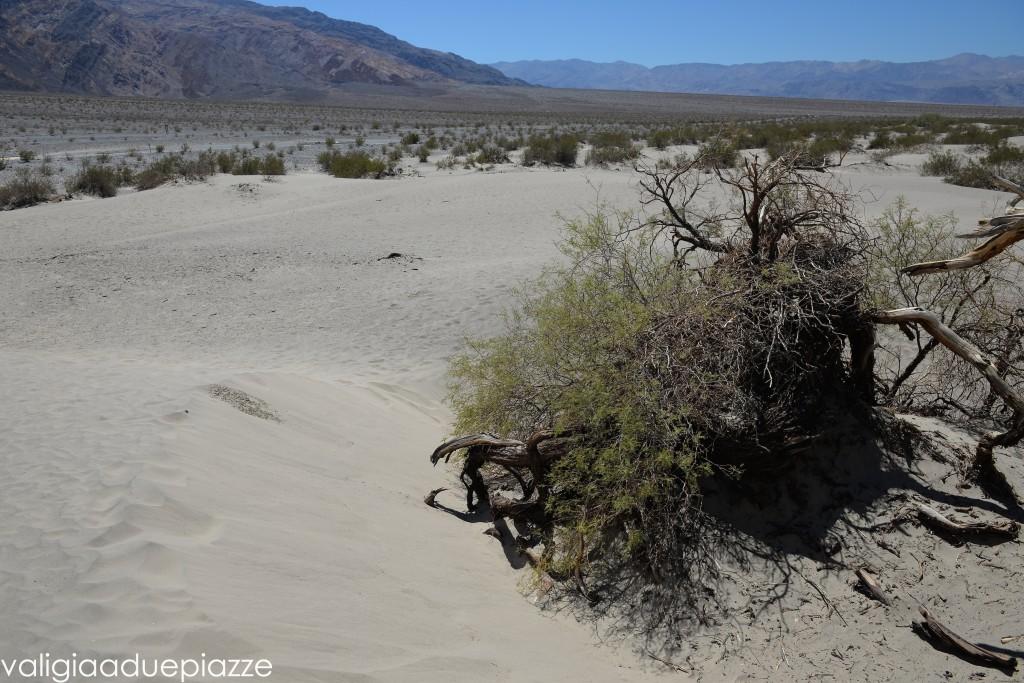 mesquite flat