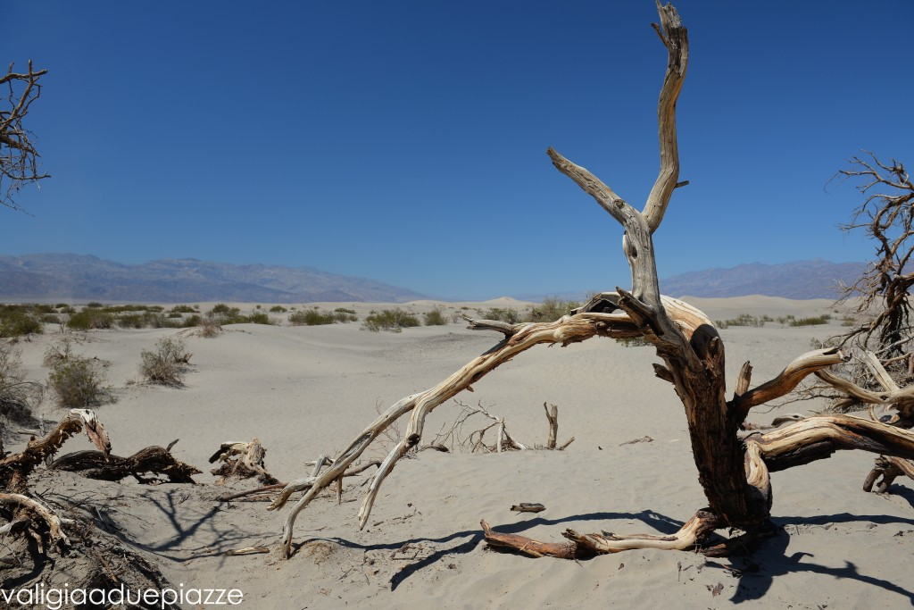 mesquite flat death valley