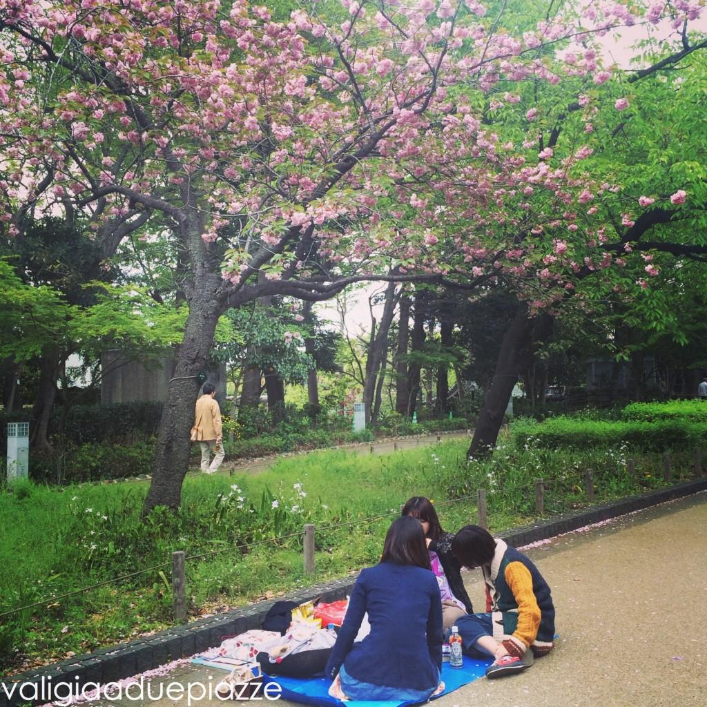 hanami sakura ueno tokyo