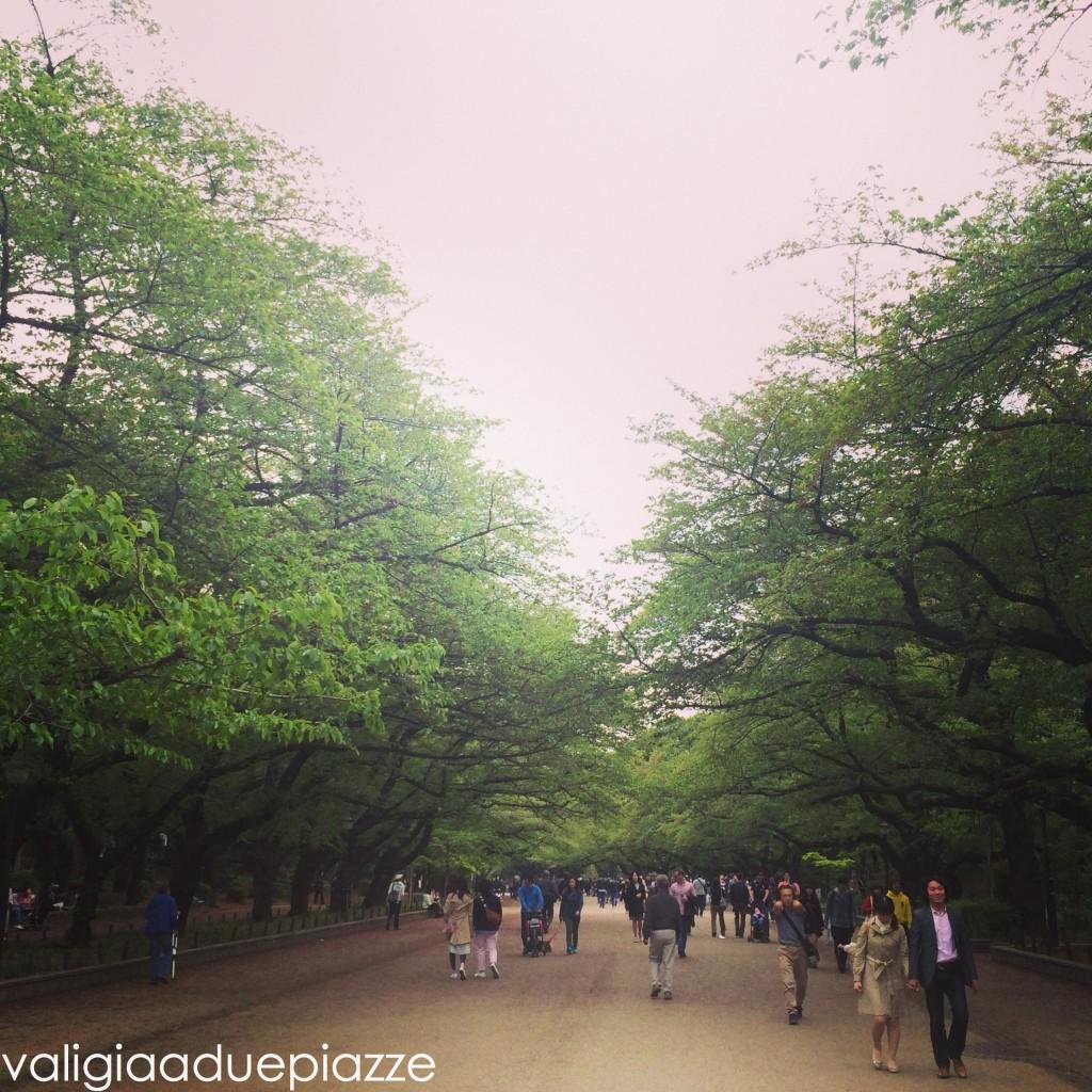 viale sakura ueno park