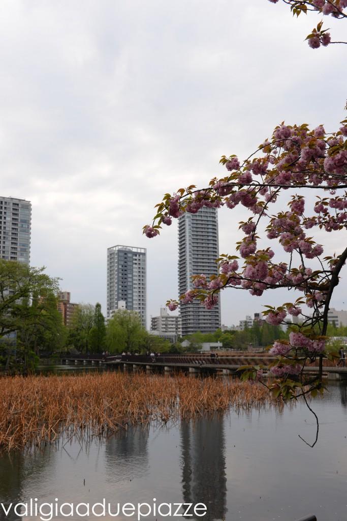 stagno shinobazu ueno tokyo