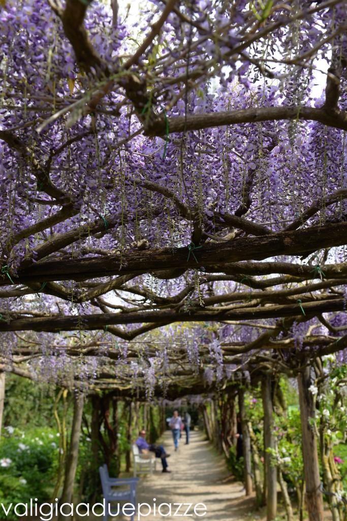 orto botanico vitorchiano glicini