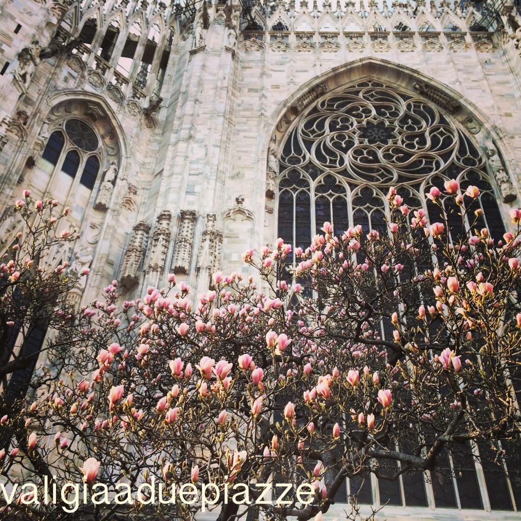 magnolia duomo milano