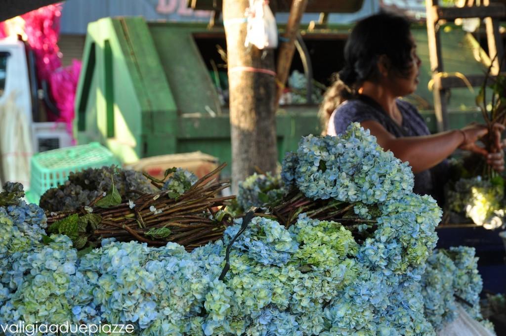 fiori offerte bali hydrangeas