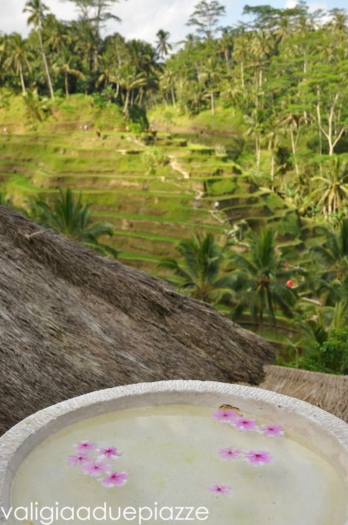tegalalang bali risaie