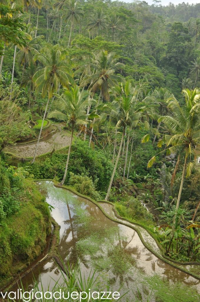 risaie gunung kawi bali