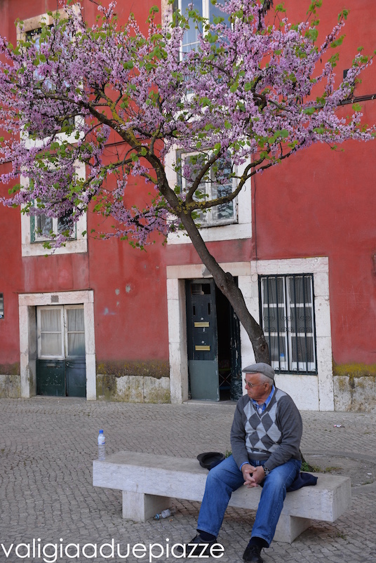 All'Alfama, alle spalle del Miradouro da Portas do Sol.
