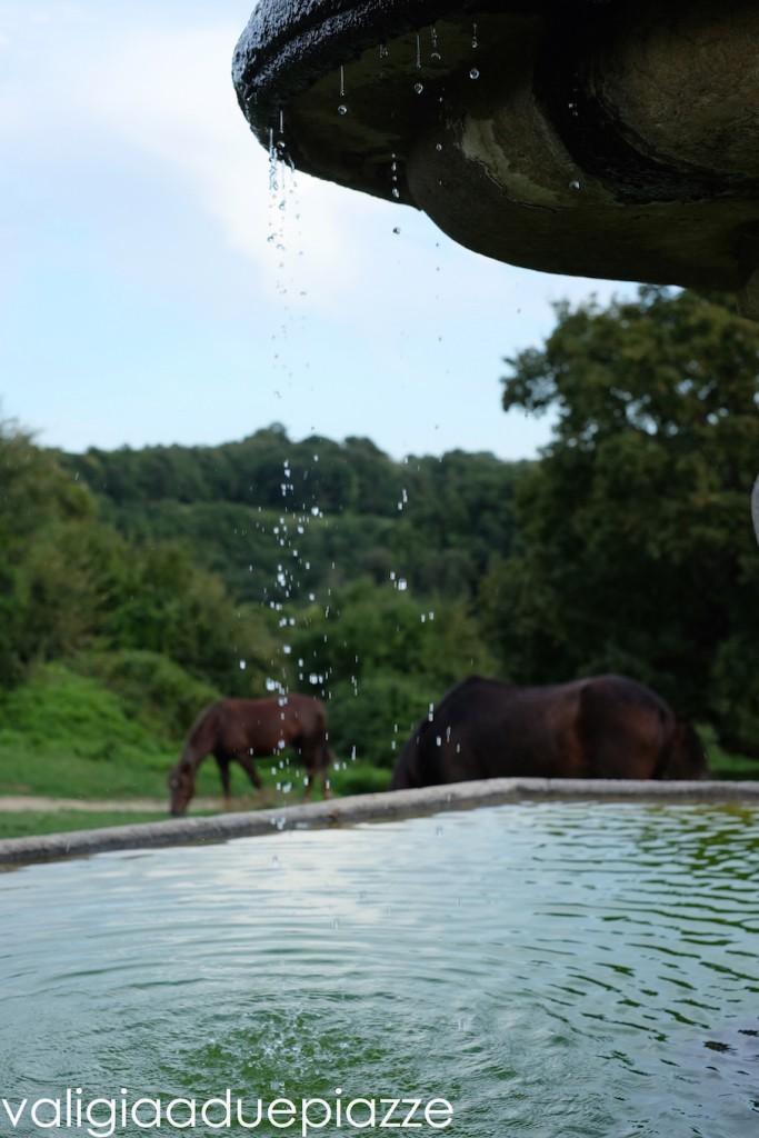cavalli al pascolo monterano vecchia