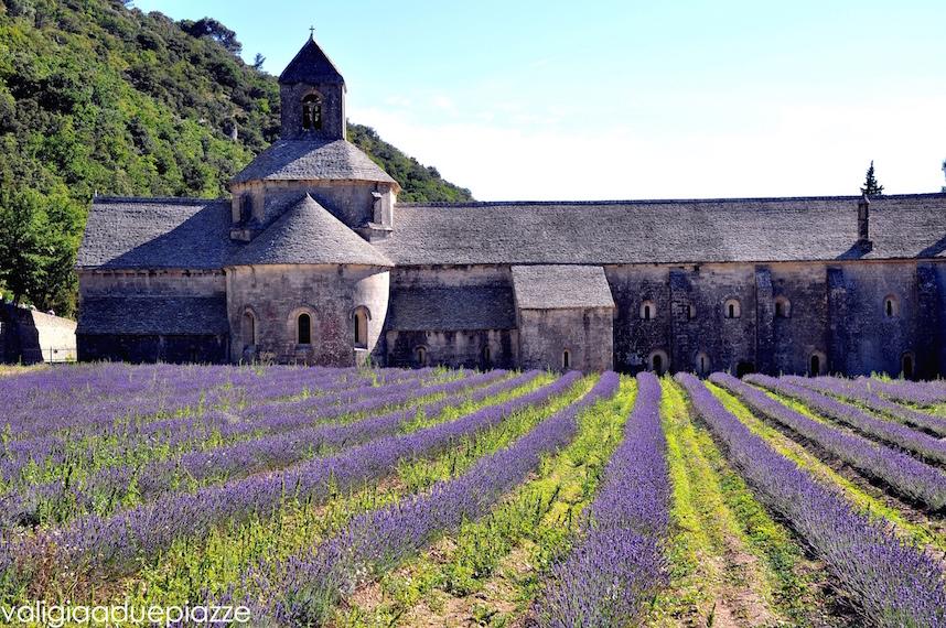 abbaye de senanque provenza