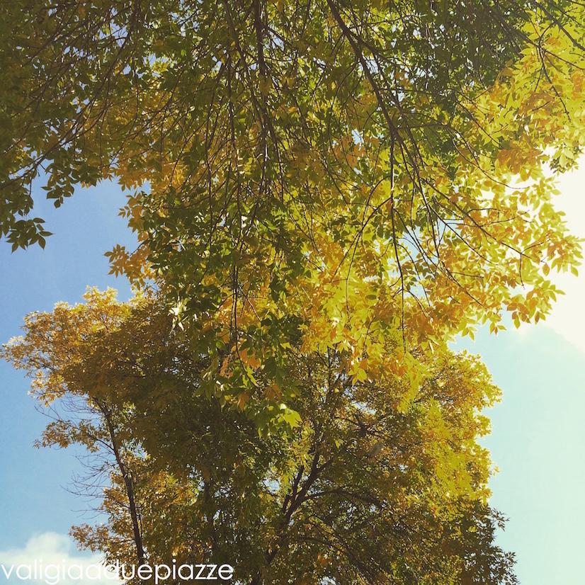 foliage milwauke usa indian summer